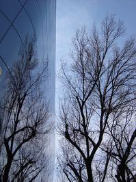 Shallow Tree