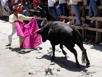 Facing the bull 1