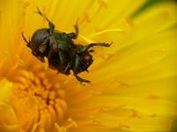 Dead bug