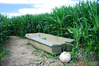 Corn and boat