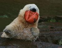 Flocke eats ball 1