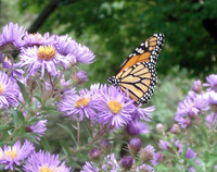 Butterfly on a Flower 1