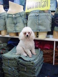 Dog & Jeans