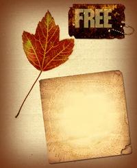 Fall Leaf Collage 3