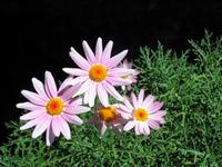 flower closeups 5