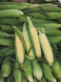Fresh Corn for Sale! 1