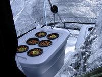 Hydroponic Cannabis Seedlings