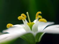 flower_ 6