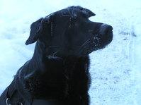 Snow Dog 1