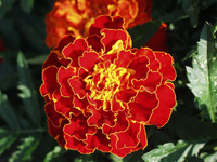 Orange yellow flower