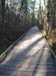 Raised Walkway through Forest