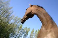 My mare