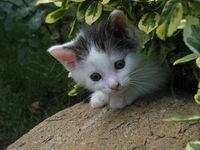 Sweet little cats 2