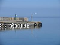 Kolby Kaas Harbour