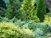 Bushes in garden
