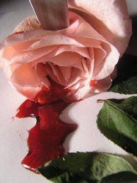 bleeding roses 10
