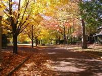 Fall road 1