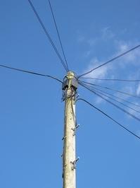 Telephone pole 2