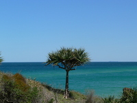 Tree of the horizon