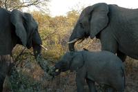 Nkosi Sikelel'i Africa #5