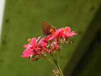 red flower 4