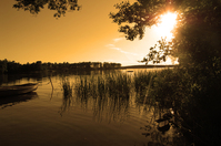 Swedish summer 3