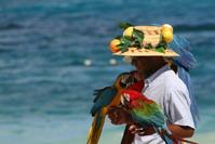 beach parrots