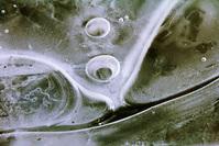 Ice Ephemera 9