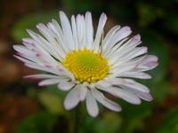 Flowers Flores 31
