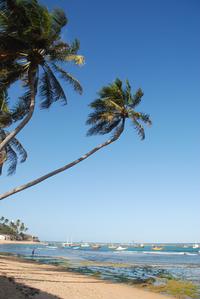 praia do forte 4