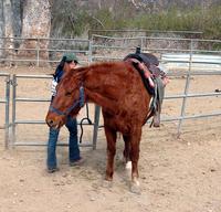 Saddle and horse 2
