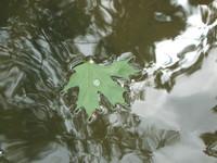 Foating Leaf
