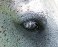 Beautiful wild horse eye