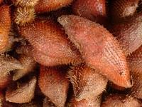 snake fruits