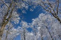 Snowy heights 1