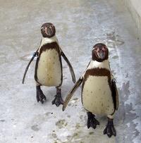 PP Penguin