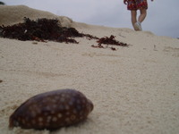 Mi camino en la arena