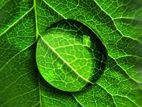 leaf/dewdrop 1