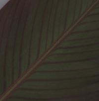 Leaf Macros 1