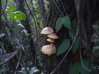 Cogumelos / Mushroom