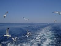 Sea and sea-gulls 1