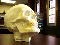 Skeleton side