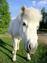 Stupid horse