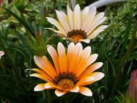 Flowers Flores 11