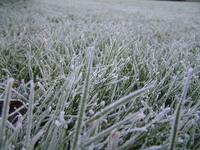 november frost 4