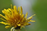 Nature Close-Ups 4