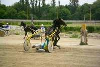 Crash on the Horseracing 3