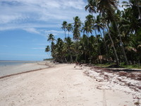 Beach of carneiros, Pernambuco, Brazil