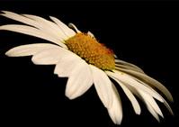 李月华虽然不是一个外表美丽的人,但仔细看,慢慢的作品,目不转睛。