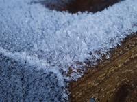 frosty wood